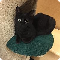 Adopt A Pet :: Ron - Barrington Hills, IL
