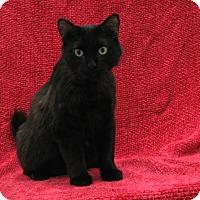 Adopt A Pet :: Kwazii - Redwood Falls, MN