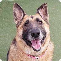 German Shepherd Dog Dog for adoption in Las Vegas, Nevada - *BUNNELBY