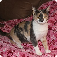 Adopt A Pet :: VENUS - Adoption Pending - Newport Beach, CA