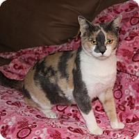 Adopt A Pet :: VENUS - Newport Beach, CA