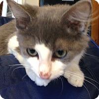 Adopt A Pet :: Flynn - Randleman, NC