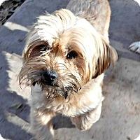 Adopt A Pet :: **STERLING - Peralta, NM