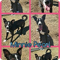 Adopt A Pet :: Minnie Pearl - Hatfield, PA