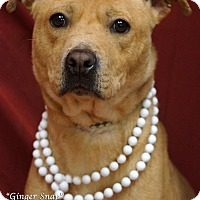 Adopt A Pet :: Ginger Snap - Newnan City, GA
