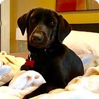 Adopt A Pet :: Carmen - Potomac, MD