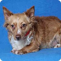 Adopt A Pet :: Estrella - Lomita, CA