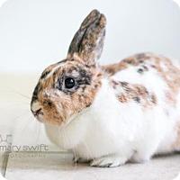 Adopt A Pet :: Nesquik - Reisterstown, MD