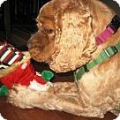 Adopt A Pet :: Rusty in PA