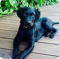 Adopt A Pet :: Jessy COURTESY POSTING - Miami, FL