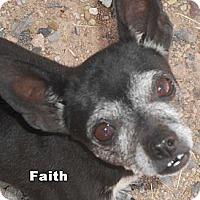Adopt A Pet :: Faith - Arenas Valley, NM