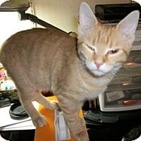 Adopt A Pet :: Janet - Philadelphia, PA