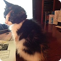 Adopt A Pet :: Casey - East Hanover, NJ