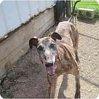 Adopt A Pet :: Emilio (Emilio Mex) - Chagrin Falls, OH