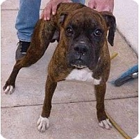 Adopt A Pet :: Drake - Scottsdale, AZ