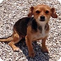 Adopt A Pet :: Robin - Cheyenne, WY