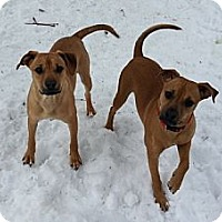 Adopt A Pet :: Julius and Victor - Bardonia, NY