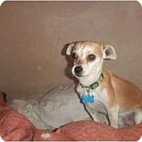 Adopt A Pet :: Jasper - Chimayo, NM