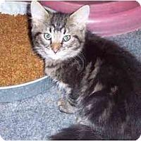 Adopt A Pet :: Ian - Delmont, PA