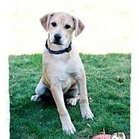 Adopt A Pet :: Zain - Haverhill, MA