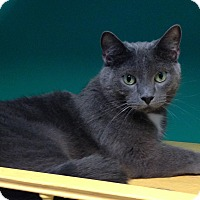 Adopt A Pet :: Lancelot - Topeka, KS