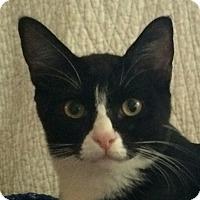 Adopt A Pet :: Jordan - Winchester, CA