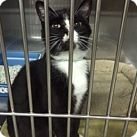Adopt A Pet :: Jackie - Byron Center, MI