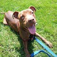 Adopt A Pet :: Concetta - Buffalo, NY