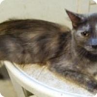 Adopt A Pet :: April - Delmont, PA