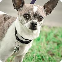 Adopt A Pet :: Bandit - Gainesville, FL