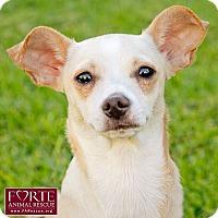Adopt A Pet :: Lola - Marina del Rey, CA