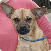 Adopt A Pet :: Pabst - Stamford, CT