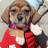Adopt A Pet :: Analeigh Tipton~adopted! - Glastonbury, CT