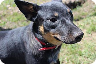 Dog Training Kittery Maine