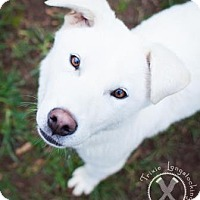 Adopt A Pet :: Clint - Eugene, OR