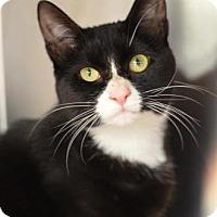 Adopt A Pet :: Monica 160650 - Atlanta, GA
