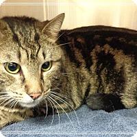 Adopt A Pet :: SHOORY - Marietta, GA