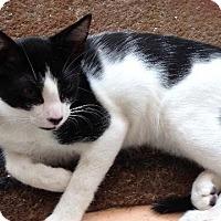 Adopt A Pet :: Squiggy - Delray Beach, FL