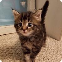 Adopt A Pet :: JigglyPuff - Garden City, MI