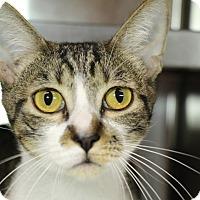 Adopt A Pet :: Reese - Sarasota, FL