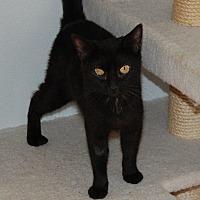 Adopt A Pet :: Baby Girl - Brainardsville, NY