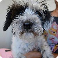Adopt A Pet :: Mimzy - Scottsdale, AZ
