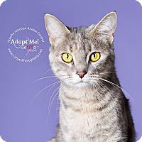 Adopt A Pet :: Lizzy - Apache Junction, AZ