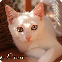 Adopt A Pet :: Snow Cone - Benton, LA