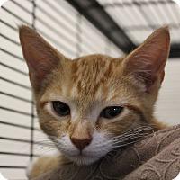Adopt A Pet :: Kinglet - Sarasota, FL