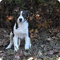 Adopt A Pet :: Rossi - Groton, MA