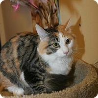 Calico Cat for adoption in Capshaw, Alabama - Pixel