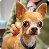 Adopt A Pet :: Jingo - Durham, NC