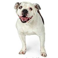 Adopt A Pet :: Tessa - Tempe, AZ