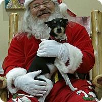 Adopt A Pet :: Bobo - Mountain View, AR